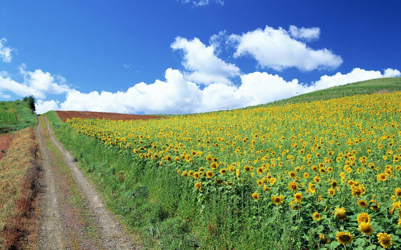 Картинки природы июнь